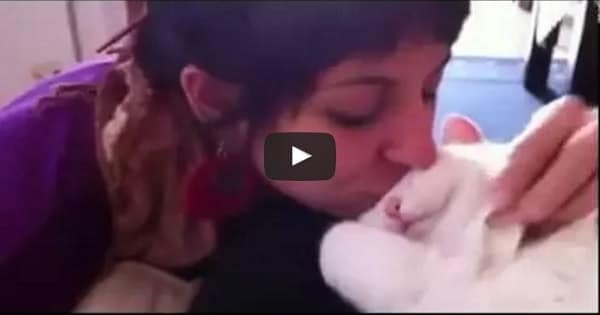 Chatty Cat Makes the Sweetest Meow When Being Kissed!