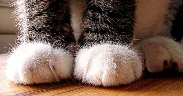The 7 Reasons You Should NEVER Declaw Your Cat!