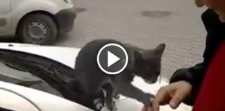 Guy Walked Up To A Stray Cat And The Sweetest Thing Happens - AWWW!