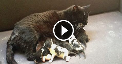 Motherless Kittens Get a Brand New Mama – Get Your Tissues Ready!