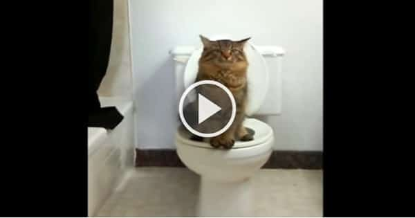 This Cat Uses Human Toilet As He Is Standing On Two Legs!