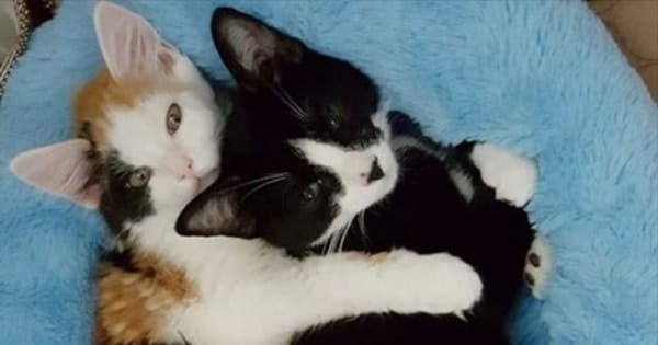 Paralyzed Kitten Falls In Love With A Special Cat And Forms A Very Unlikely Friendship