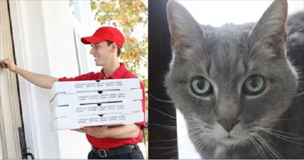 A Pizza Man Was 'Tipped' a Kitten 17 Years Ago And Today Here's Mr. Tips