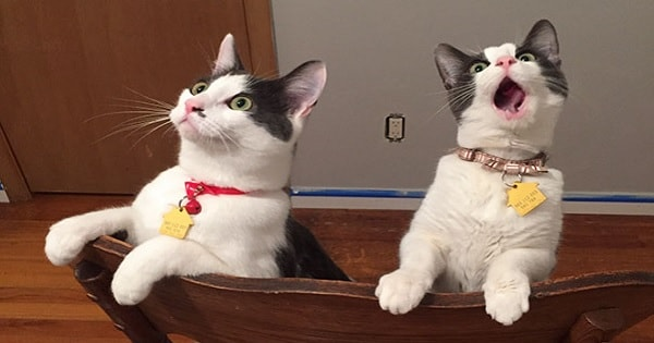 14 Kitty 'Reactions' To First Times Doing Stuff!