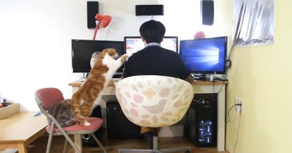 Five Cats Letting Their Beloved Human Know That It's Time To Eat