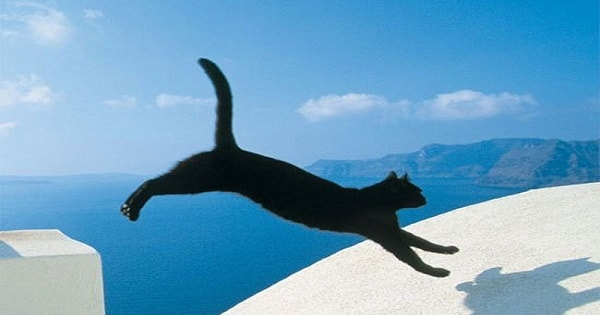 The 41 Most Unexpected Cat Jumps Of All Time