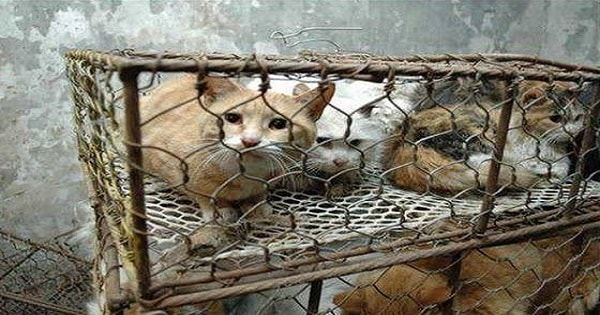 Taiwan Officially Bans The Eating Of Cat and Dog ...
