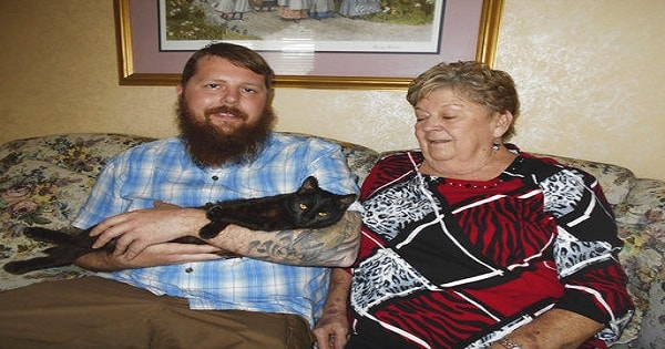 Cat Who Was Tortured In Afghanistan Is Rescued And Finds Forever Home In …