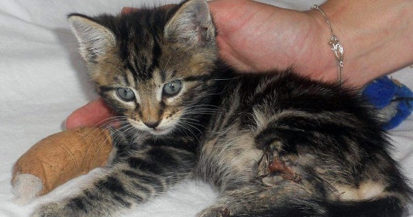 Three Kittens Survive Brutal Attack By Gang Of ...