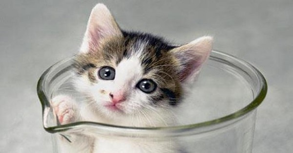 CC, The World's First Cloned Cat, Turns …