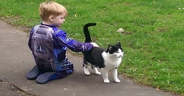 Young Boy Tried To Befriend Neighbor's Cat For One Year, Then One Day He Made It