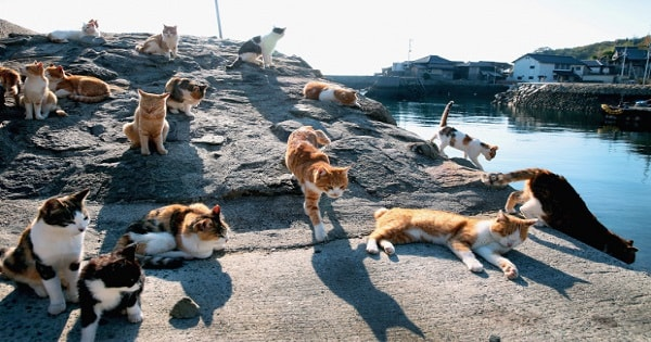 Japan's Cat Islands Aren't The Paradise They Seem To Be...