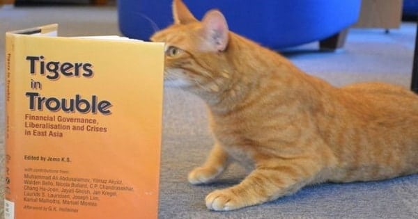 University's three-legged cat 'relieves exam stress'