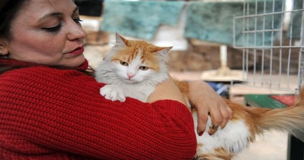Cat Rescued By Turkish Soldier In Syria Finds Forever Home In A …