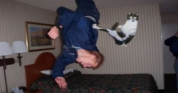 13+ Amazing Ninja Cats That Will Brighten Your Day