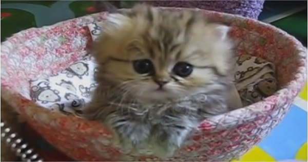 This Is India, the Most Innocent Kitten in the Entire World