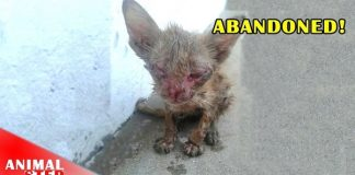 This Emaciated 3-Month-Old Kitten Is Rescued - Watch Her Amazing Story Here