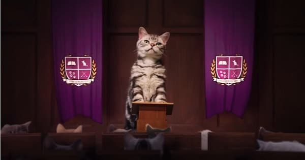 Kitten Kollege: Where Adorable Kittens Learn How To Be Even Cuter