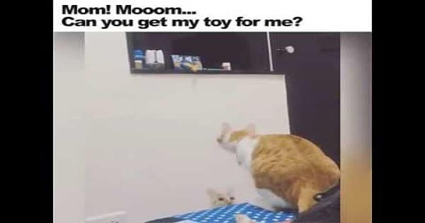 Kitten Can't Reach Her Favorite Toy And So – She Calls Mama In To Help