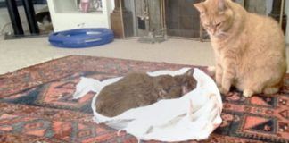 Cat's Best Friend Dies From Cancer - And How He Said, 'Goodbye'