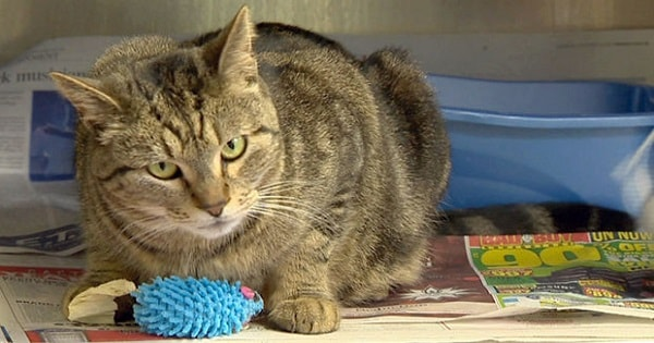 Missing California Cat Found 4 Years Later – And You'll Never Guess Where