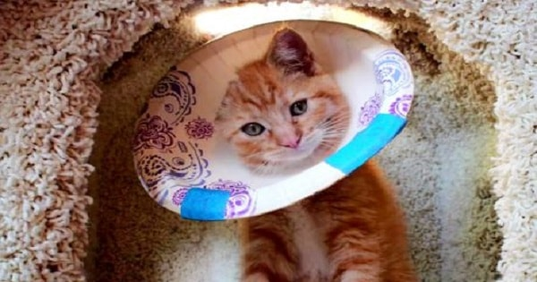 Tiny Kitty Loses One Ear – But Still Loves To …