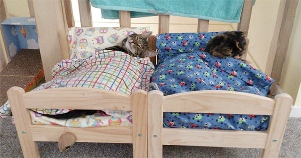 Shelter Cats Curl Up on Donated IKEA Beds – Watch The Adorable Clip