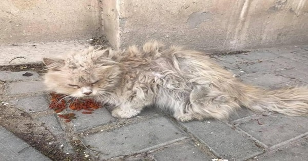Hungry, Dirty Stray Kitty Gets Rescued After a Life Of Abuse and Now He Can't Stop ...
