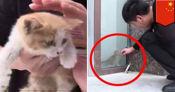 Tiny Kitten Rescued After Trapped Behind Glass Wall for Three Days