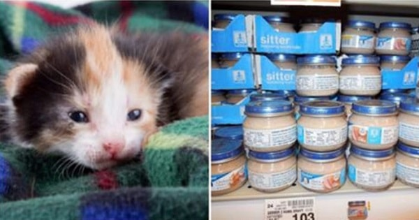 12 Items You Have In Your Home That Can Be Donated To Your Local Animal Shelte