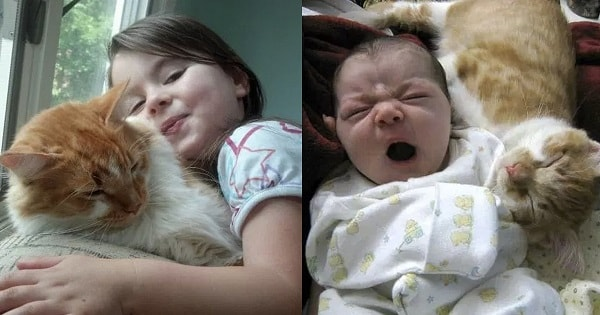 Buddy the Cat & His Tiny Human Grow Up Together