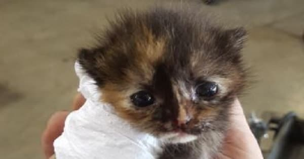 Man Finds This Tortie Kitten Hiding In His Car And Now …
