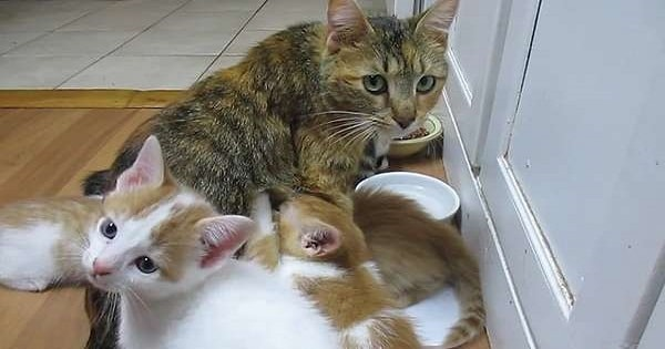 This Mama Cat Just Wants A Moment To Herself, But Hungry Babies Refuse To ..