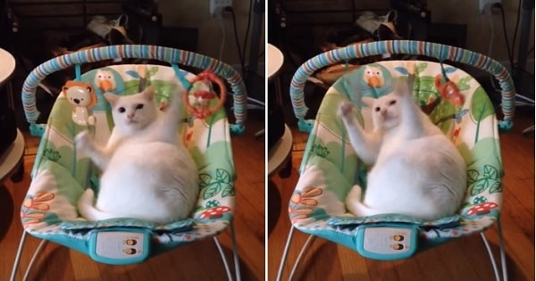 This Cat Enjoys Baby's Swing More Than The Baby