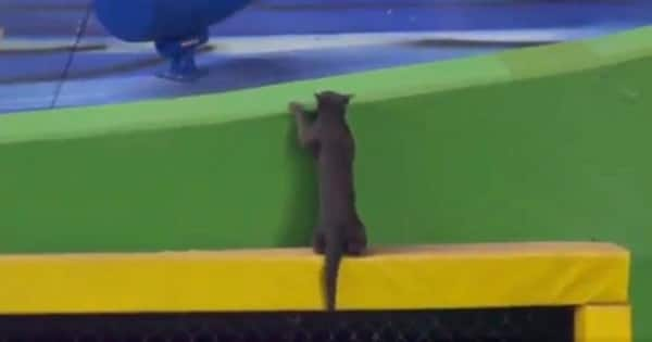During Miami Marlins Game, Cat Pulls Off Successful Escape After Daring …
