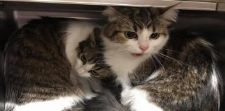 Bonded Cats Literally Cling To Each Other After Being Dumped At ...