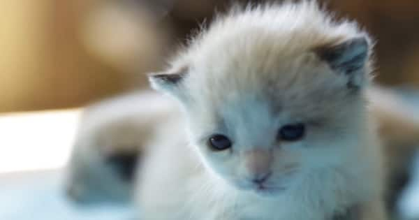 These Two Poor Kittens Were About To be Euthanized Until …
