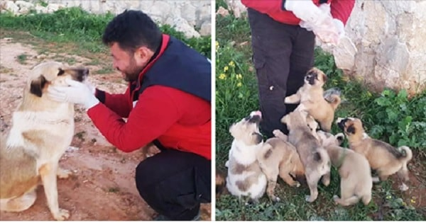 Dog Abandoned With Her Litter of 15 Puppies Finds The 'Purr-fect Person' To Help Them