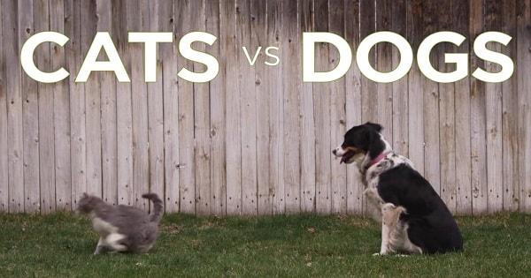 Alas! Dogs May Not Longer Be – Man's Best Friend