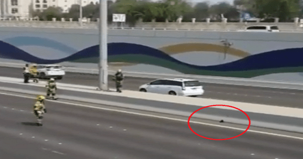 Video of Cat Saved by Abu Dhabi Civil Defence Goes Viral