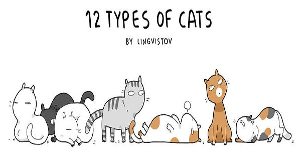 The 12 Different Types Of Cats