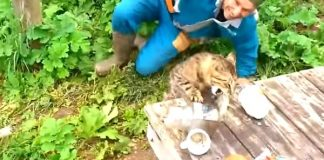 This Cheeky Kitty Will Leave You In Rolling With Laughter