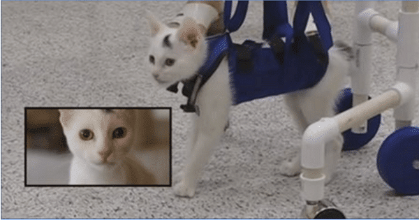 Abandoned Kitty Born with Neurological Disorder Learns How To …