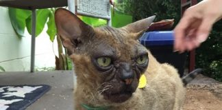 They Went And Adopted The Ugliest Cat At A Shelter And They Couldn't Be ...