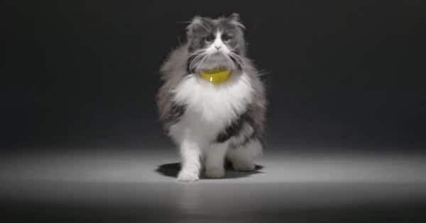 This Cat Collar Translates Meows Into Human Speech
