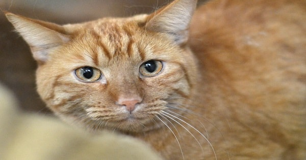 Missing Denver Cat Pulled Out Of Hole – Wait Until You Find Out Where