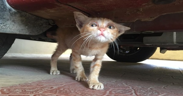 Stray Kitten With Sad Eyes Was Rescued - And Now, Six Months Have Passed And ...