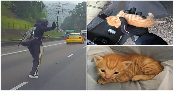 Motorist Dives Into Rush Hour Traffic To Save Tiny Kitten