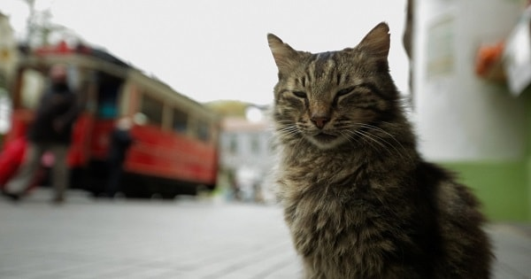 Documentary 'Kedi' About Istanbul's Street Cats, Finally Lands On …