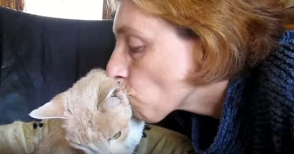 Clip Showing Woman Cleaning Her Senior Cat Might Be The Sweetest Video On The Internet